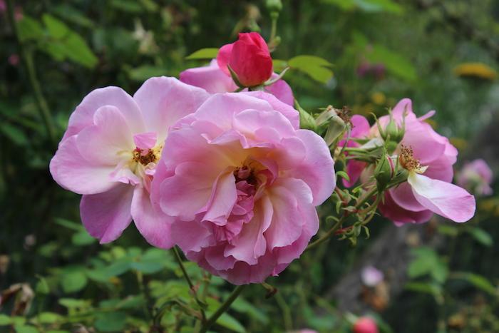 My Sunday Photo - My first flower shot