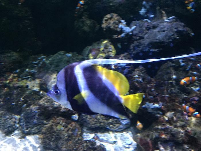LA fishes 1