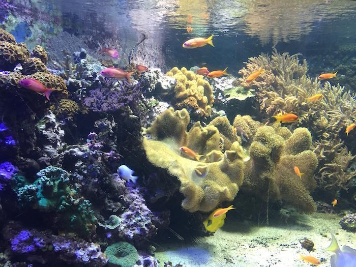 LA fishes 2