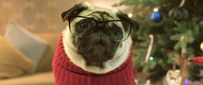 Vision Direct - Gizmo the Pug