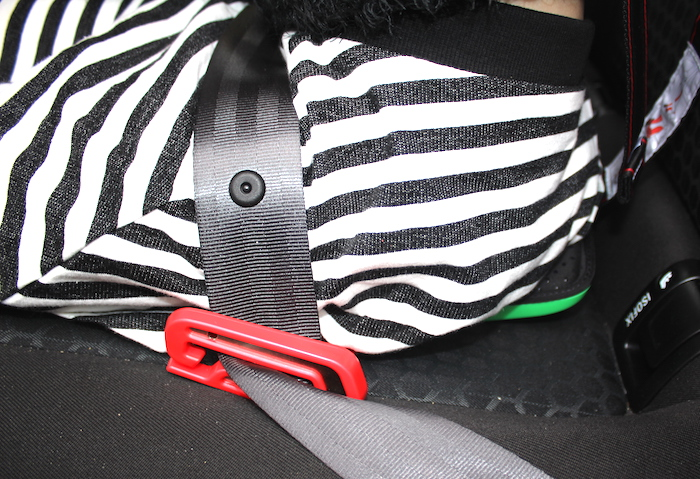 Bella in the car on a mifold 3