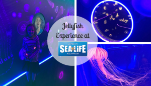 Jellyfish Experience at Sealife Aquarium London