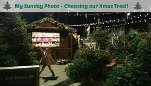 My Sunday Photo – Choosing our Xmas Tree!!