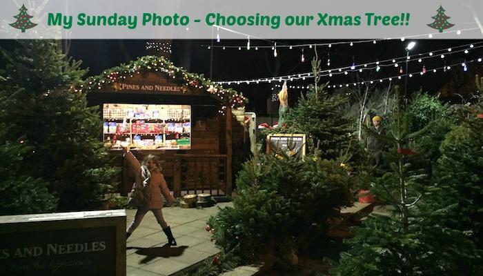 My Sunday Photo – Choosing our Xmas Tree!!
