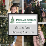 Pines And Needles -- Another Year Choosing Our Tree